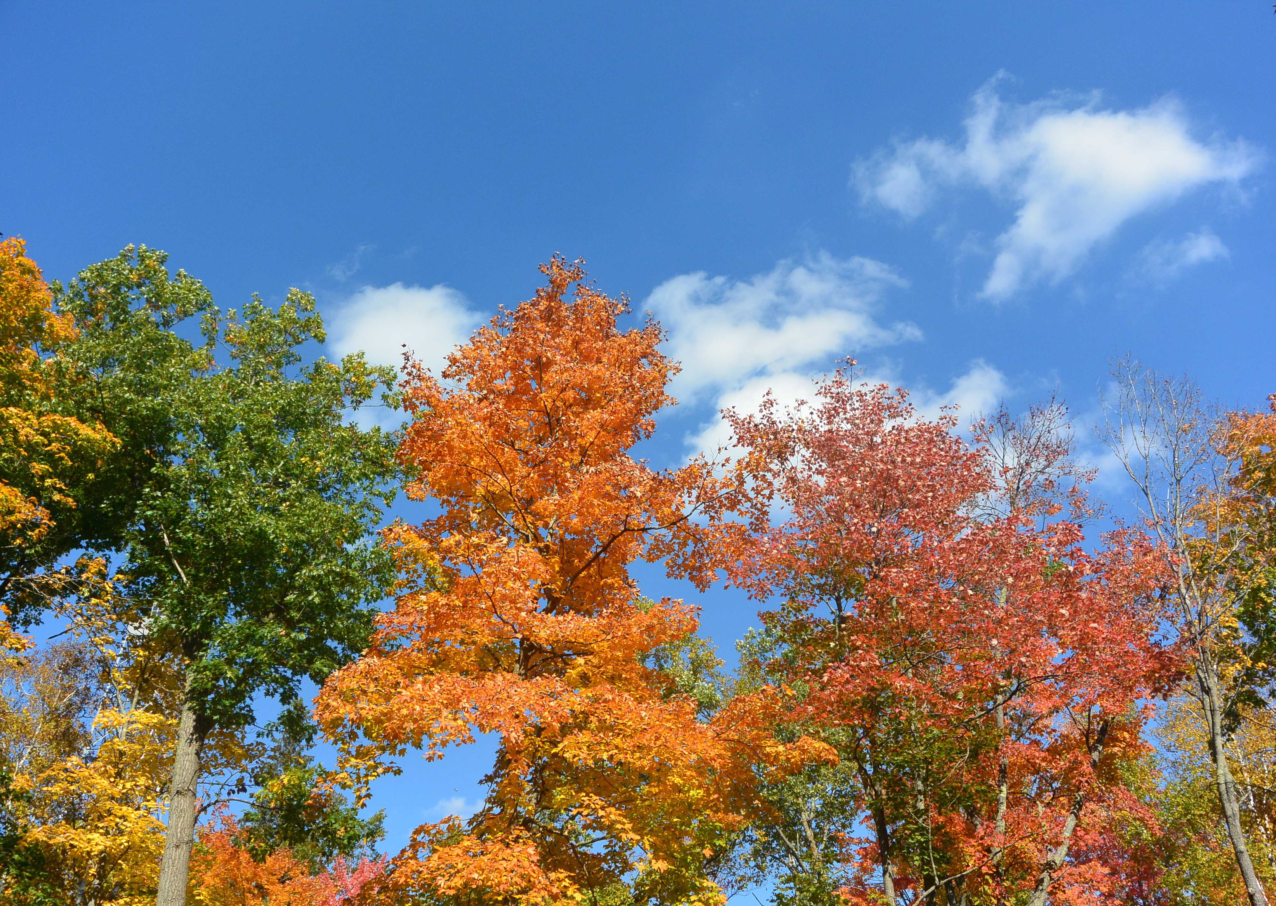 Photo+of+the+beautiful+fall+colors+at+the+Forest+History+Center+in+Grand+Rapids.+Photo+by+Amy+Lebowitz%2715.