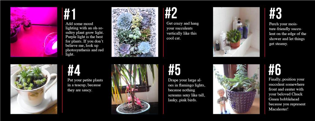 Tips for dorm decorating: Sultry Succulents