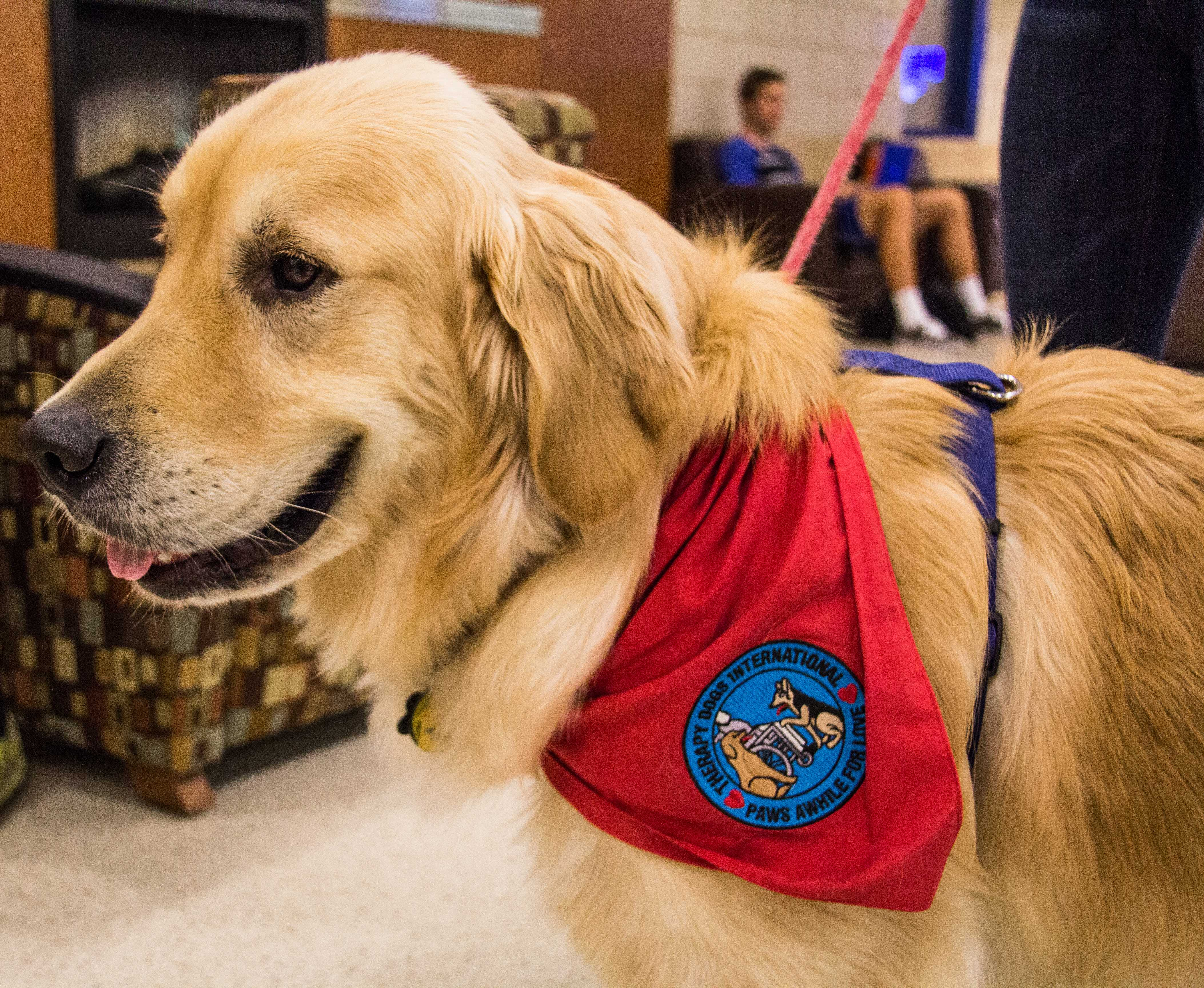 Paws for applause: Kevin is easing ruff times at Macalester