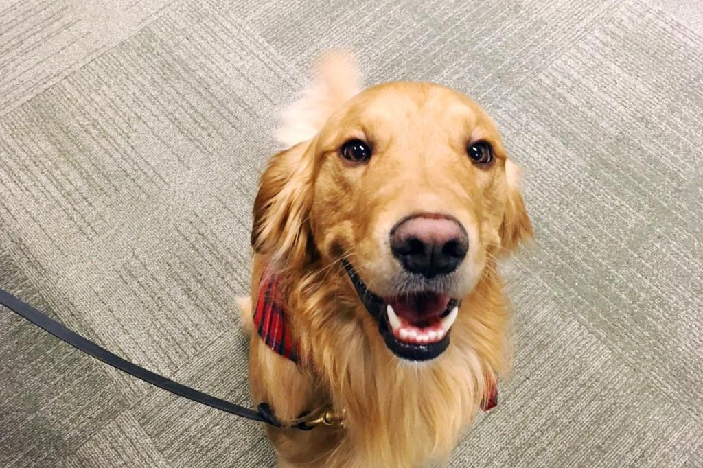 The big dogs on campus: welcoming two new therapy dogs