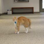 Campus cat gains fame