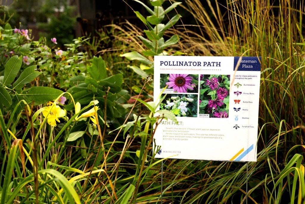 A+Pollinator+Path+sign+designed+by+Aubrey+Arnt+%E2%80%9821+and+Collin+Dobie+%E2%80%9819+indicates+a+pollinator-friendly+landscape+on+campus.+This+sustainability+initiative+could+unite+St.+Paul+colleges+and+help+protect+bee+populations.