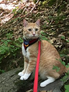 11ecebe4b Max is king of the rock. Max has learned to walk on a leash since his rise  to internet fame.