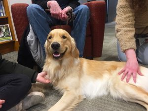 PAWS@Mac: bringing joy and stress relief to Mac students