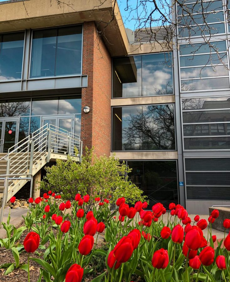 Tulips grow outside of the Olin Rice Science Center. Photo by Katherine Irving '22.